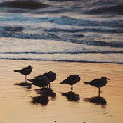 Kalaloch Birds II