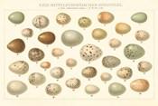 Song Bird Egg Chart v2