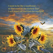 I Want to be a Sunflower