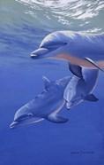 Dolphin Smile