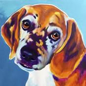 Beagle - BJ