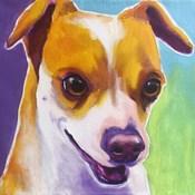 Chihuahua - Duncan