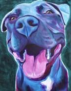Pit Bull - Sky Blue