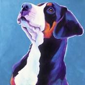 Swissie - Puppy