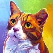 Cat - Ernie