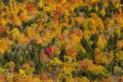 Vermont's Glory
