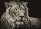 The Lion Sepia