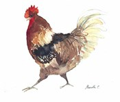 Rooster B