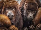 Oranje Monkeys