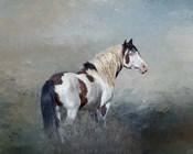 Shaman - S Steens Wild Stallion
