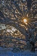 New Years Steens Mountain Sunrise