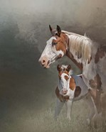 Chinook & Her Foal