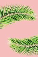 Pink Palm II