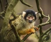 Cute Monkey II