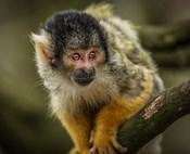 Cute Monkey IV