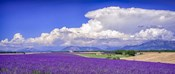 Cloud Bank Over Lavender - Panorama