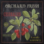Orchard Fresh Cherries