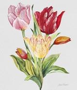 Botanicals 9