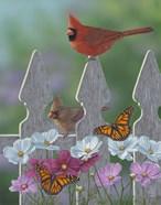 Royalty Cardinals Monarchs