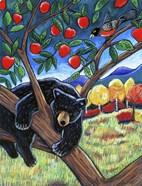 Bear In The Apple Tree
