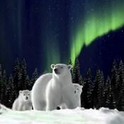 Polar Family 2