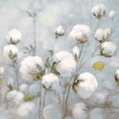 Cotton Field Blue Gray Crop