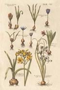 Vintage Florilegium II