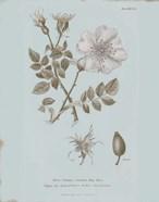 Conversations on Botany IV Blue