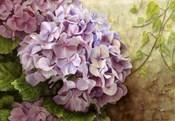 Hydrangea With Ivy