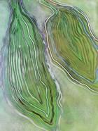Aquamarine Duo