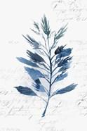 Botanical Blue II
