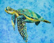 Floating Sea Turtle
