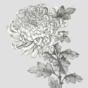 Grey Botanical I