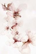 Watercolor Blossoms II