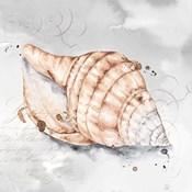 Blush Shell I