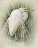 Vintage Egret