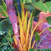 Palm Impressions 3