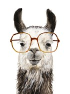 Hip Llama III