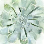 Verdant Succulent IV