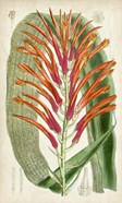Tropical Gems VI