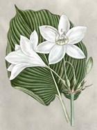 Alabaster Blooms III