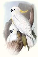 Pastel Parrots V