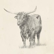 Longhorn Steer Sketch I