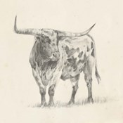 Longhorn Steer Sketch II