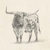 Longhorn Steer Sketch II