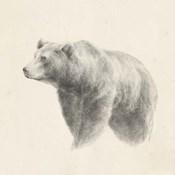 Western Bear Study