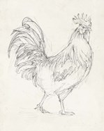 Rooster Sketch I