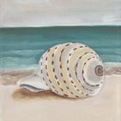 She Sells Seashells II