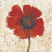Red Poppy Portrait I