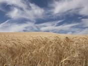 Farm & Field II